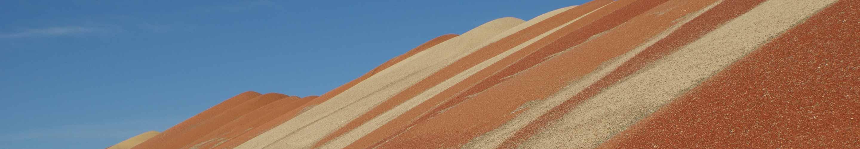 Cash Grain Bids | Skyland Grain