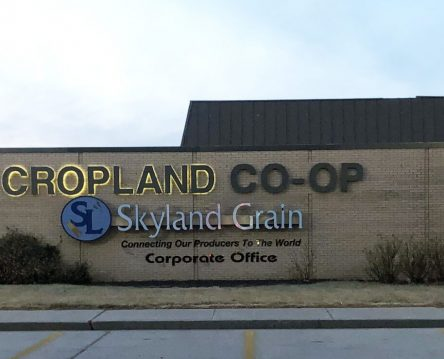 Cropland
